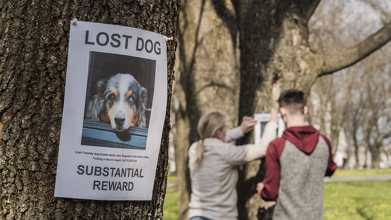 A man and a woman are looking for a missing pet, putting up posters.